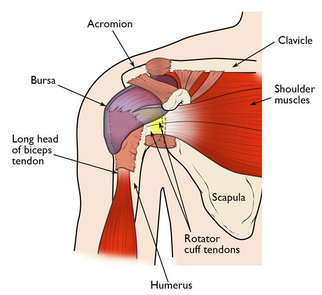 Shoulder Pain Treatment Can Chiropractors Help Yes